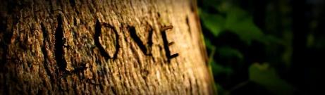 love-in-forest-blog-header